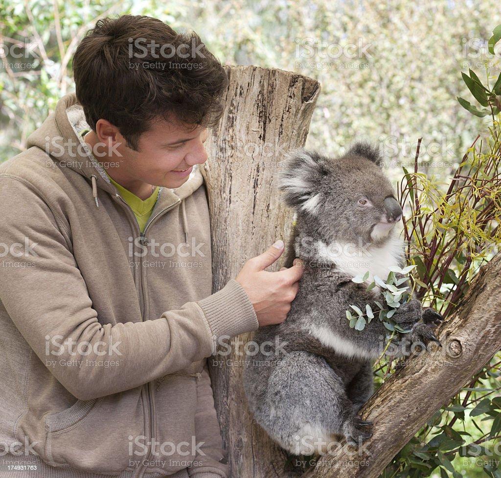 Man petting Koala in wildlife (XXXL) stock photo