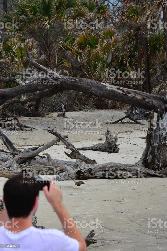 Man photographing dead trees on coastline stock photo
