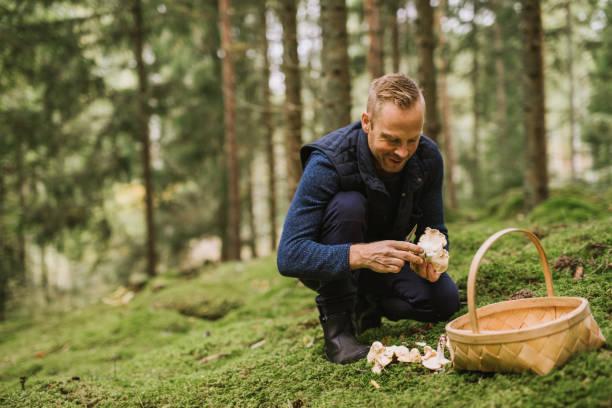 mannen plocka svamp i skogen kantareller och yellowfoot - höst plocka svamp bildbanksfoton och bilder