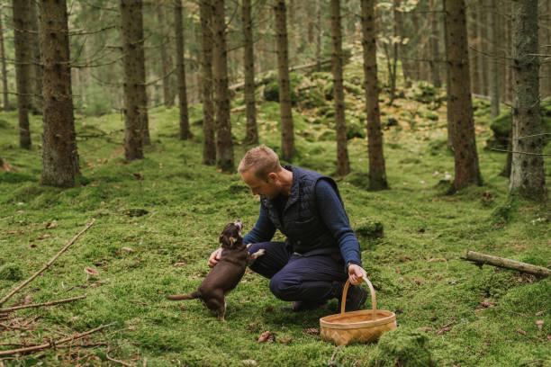 mannen plocka svamp i skogen med sin lilla hund - höst plocka svamp bildbanksfoton och bilder