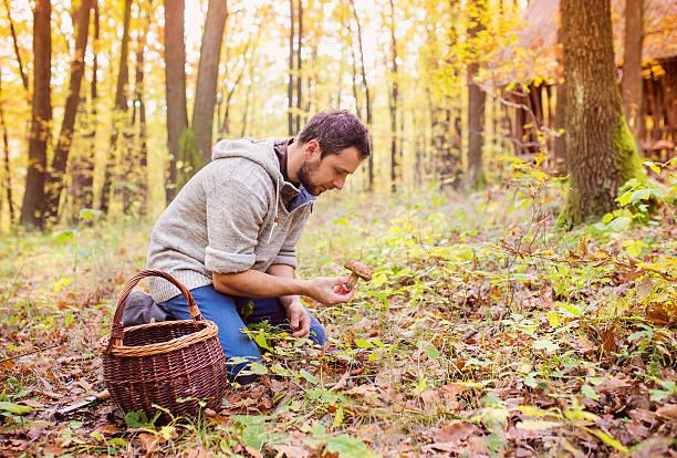 man picking mushrooms - höst plocka svamp bildbanksfoton och bilder