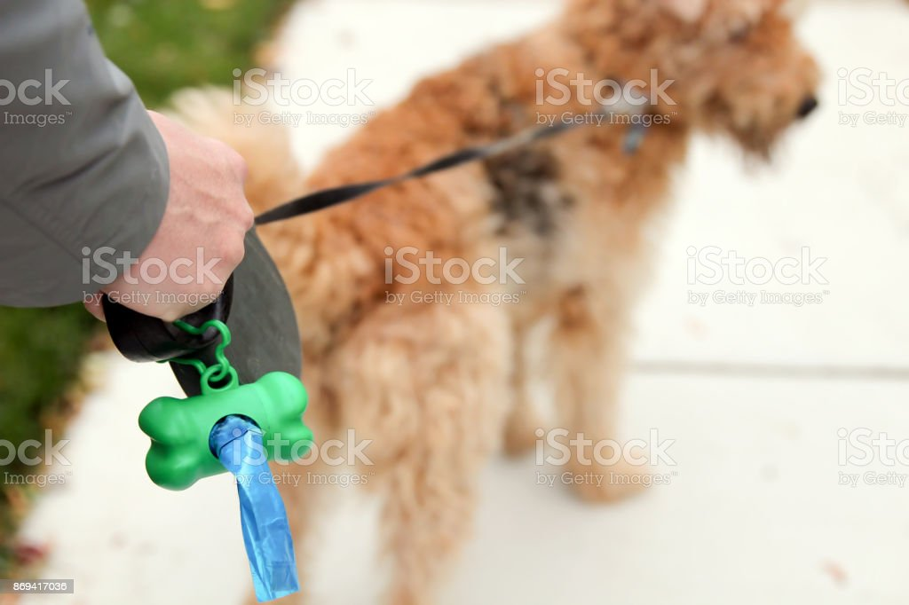Man  Picking up / cleaning up dog droppings stock photo