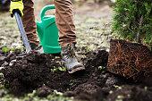 istock Man planting a garden 1127546478