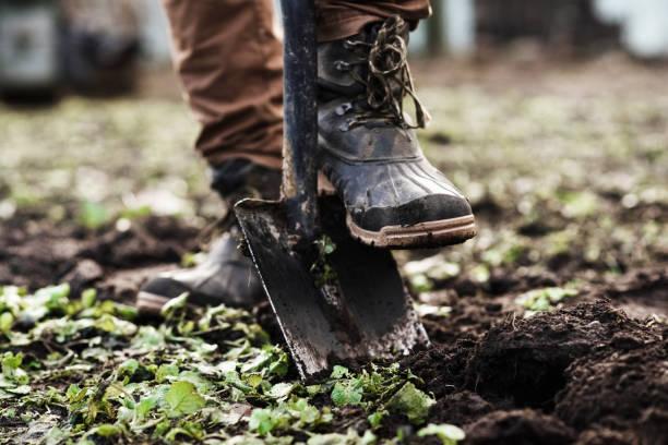 人種植花園 - 鏟 個照片及圖片檔
