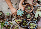 Man planting cactus and succulent plants