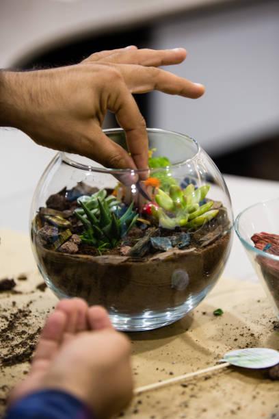 der mensch pflanzen kakteen - terrarienpflanzen stock-fotos und bilder
