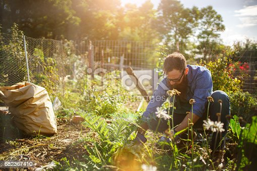 istock man planting crops in communal garden 682367410