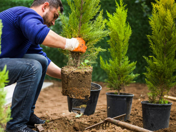 Man planting evergreen tree Man planting evergreen tree, Antalya, Turkey landscaped stock pictures, royalty-free photos & images
