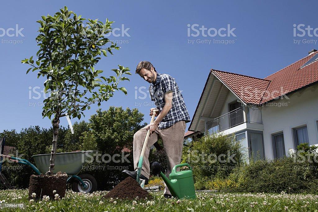 Man planting tree in backyard stock photo