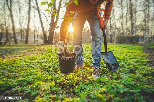 istock Man planting tree on Arbor day in springtime 1144977391