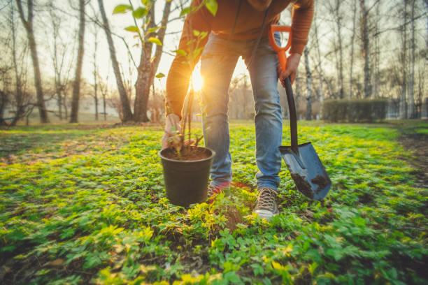 arbre de plantation d'homme sur le jour d'arbor au printemps - plante photos et images de collection