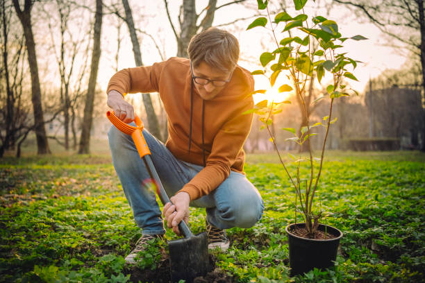 Mann pflanzt Baum im Frühling im Freien – Foto
