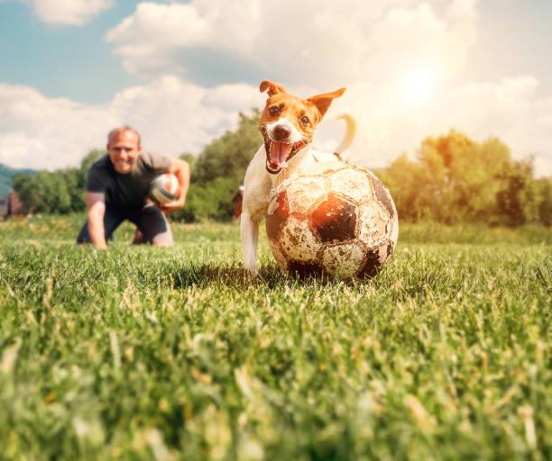 L'homme joue avec le chien sur le pré vert - Photo