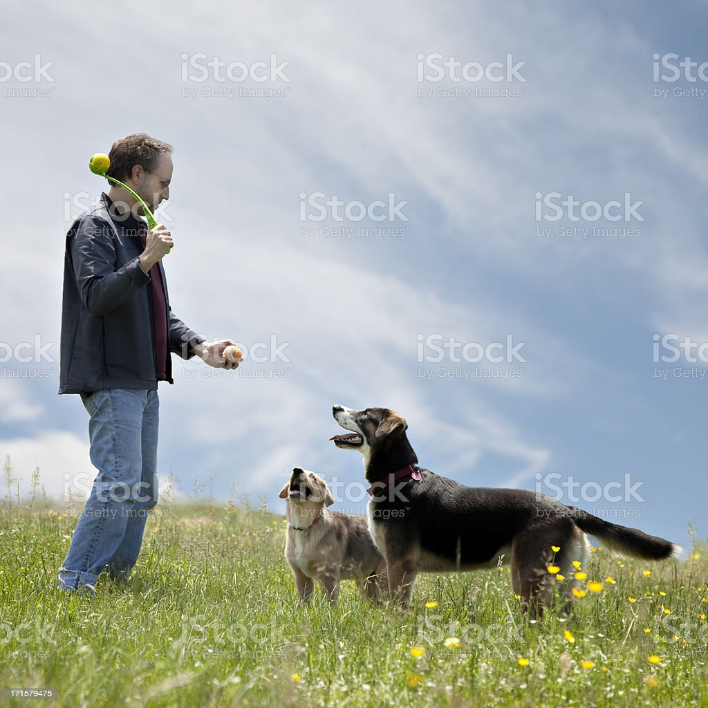 Man playing ball with his two dogs royalty-free stock photo