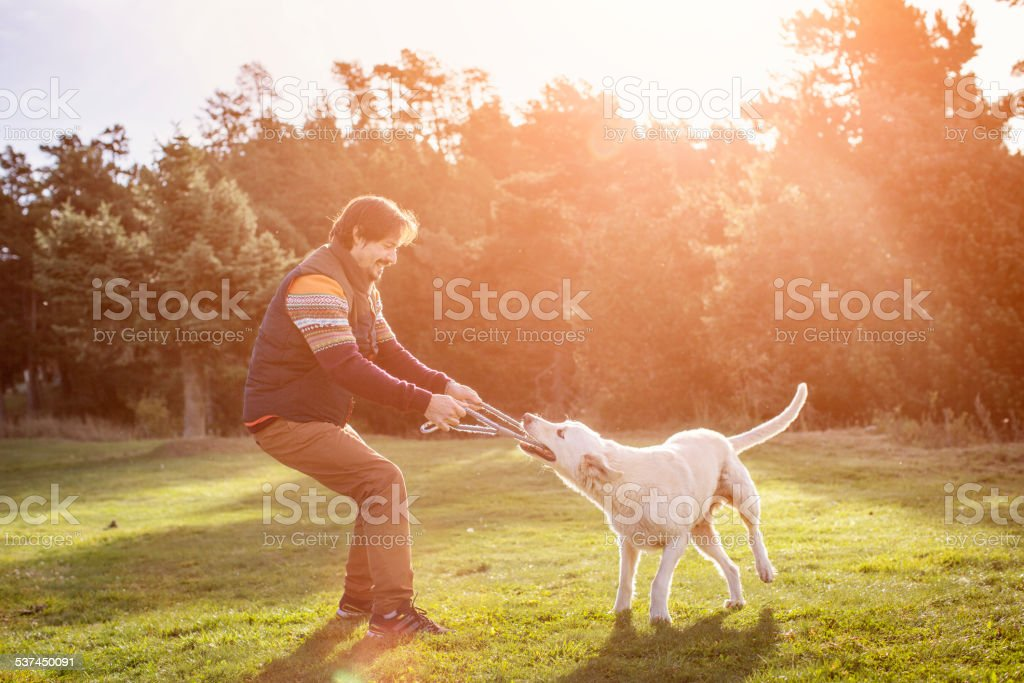Man playing tug of war with dog in park stock photo