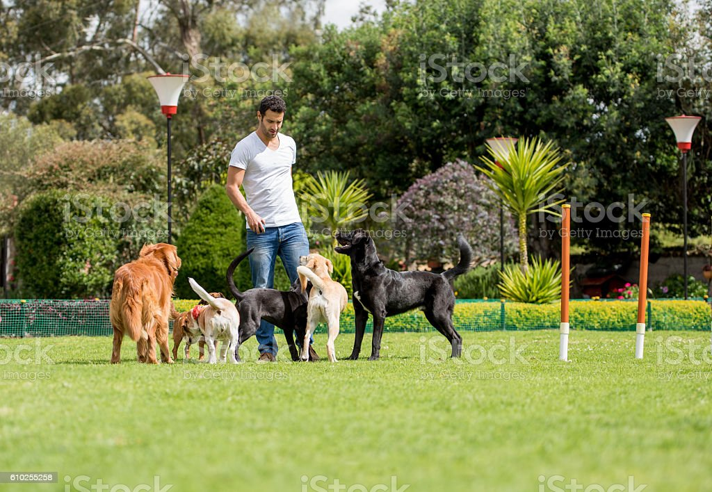 Man playing with dogs stock photo