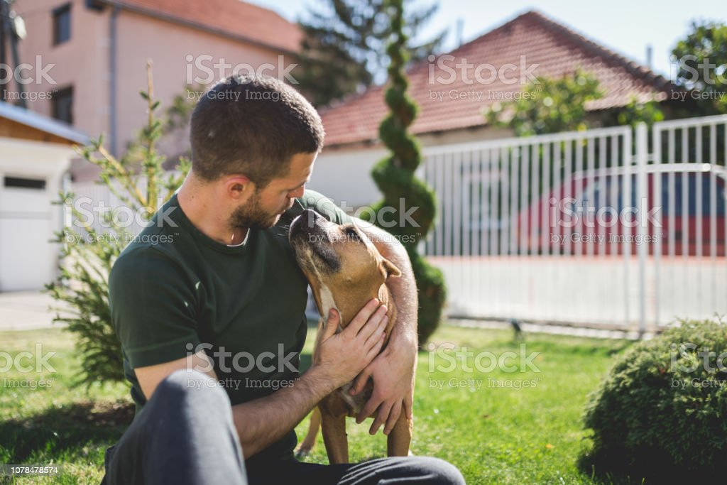 Man playing with his dog in the yard stock photo