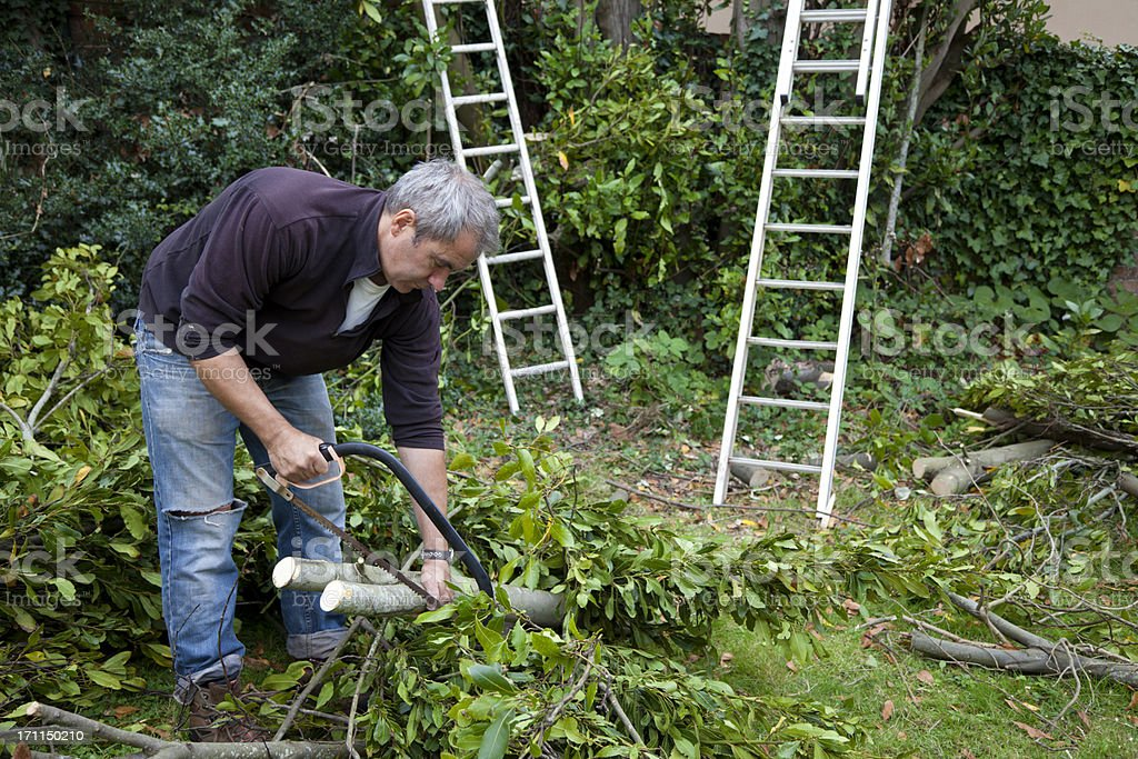 Man Pruning Tree royalty-free stock photo