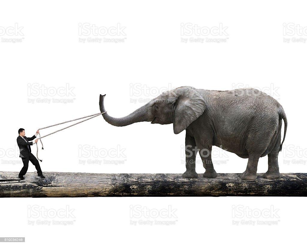 Man pulling rope against elephant balancing on tree trunk stock photo