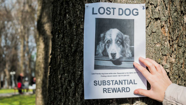 man puts up an announcement about the loss of a pet - lost стоковые фото и изображения