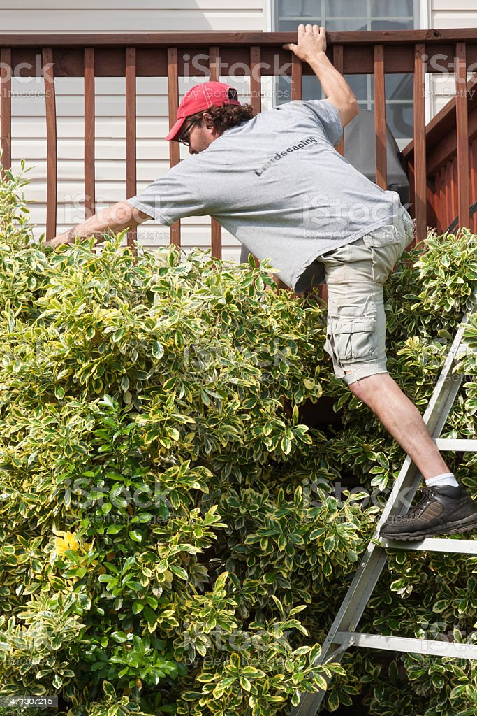 Man Reaching from a Ladder royalty-free stock photo