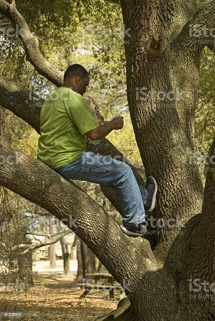 Man Reading in Tree stock photo