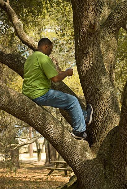 Man Reading in Tree stock photo