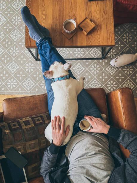 mann entspannt mit seiner französischen bulldogge auf einem sofa, blick über - kleiner couchtisch stock-fotos und bilder