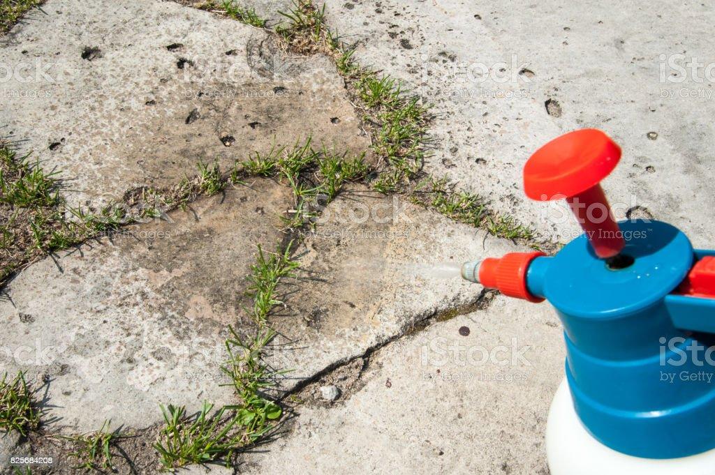 Homem remove ervas do gramado - foto de acervo