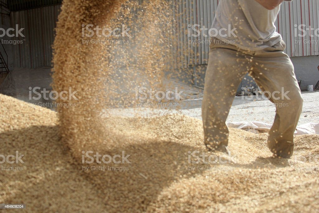 Man revolving animal food on air stock photo