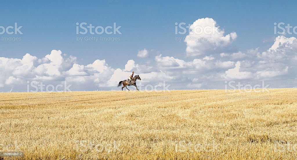 Man ride horse on field - freedom and hapiness stock photo