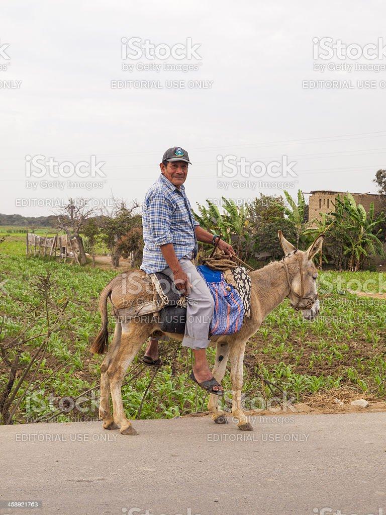 Man rides a Donkye, Chiclayo, Peru royalty-free stock photo