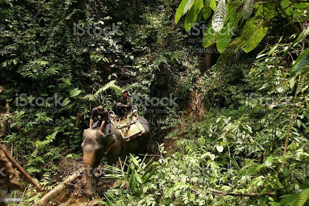 Mann reiten Elefanten im Regenwald – Foto