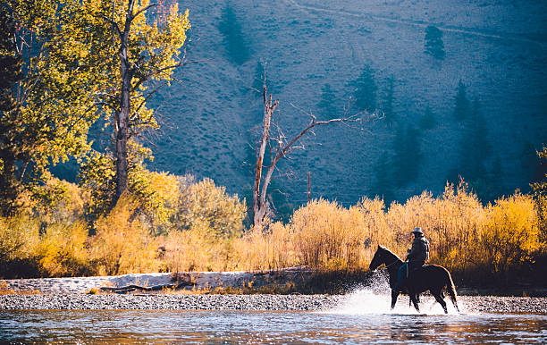 Man rides horse through shallow water along riverbank stock photo