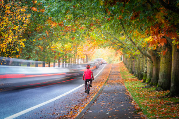 Man riding bicycle on street surrounded by autumn foliage while cars passing quickly stock photo