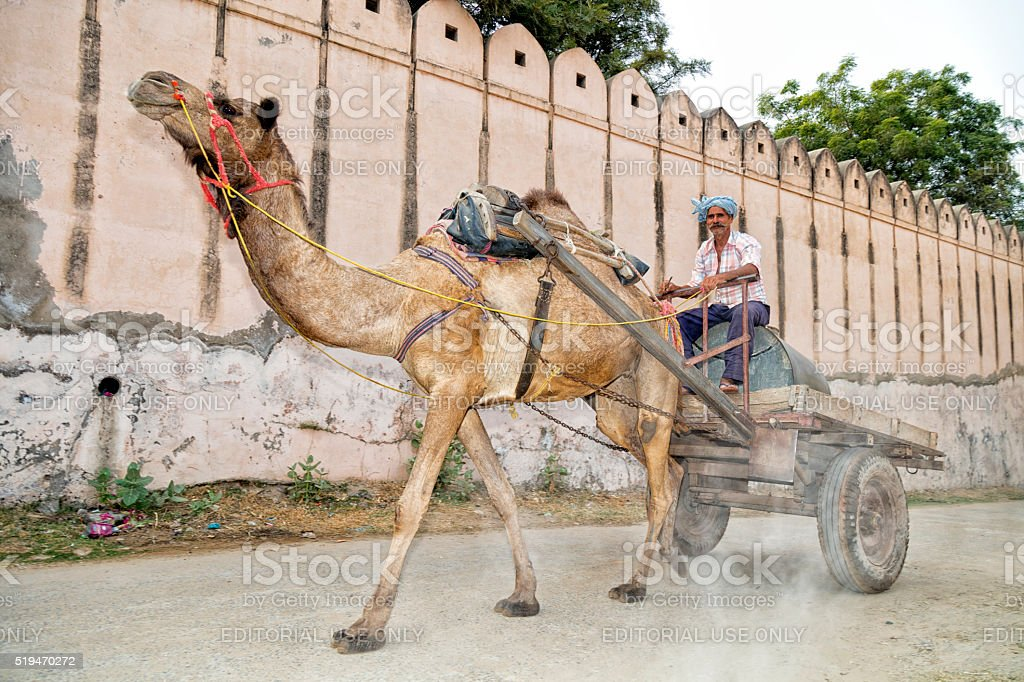 Man riding on camel drawn cart in Alsisar, Rajasthan, India stock photo