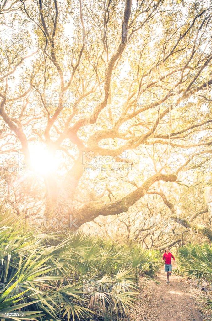 Man runs under tree on trail at sunset stock photo