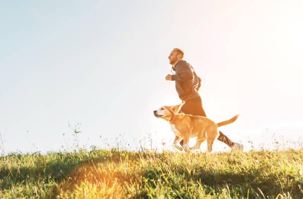 El hombre corre con su perro beagle. Ejercicio matutino de Canicross - foto de stock