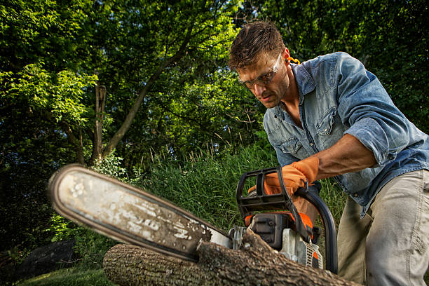 man sawing a log - chainsaw stock photos and pictures