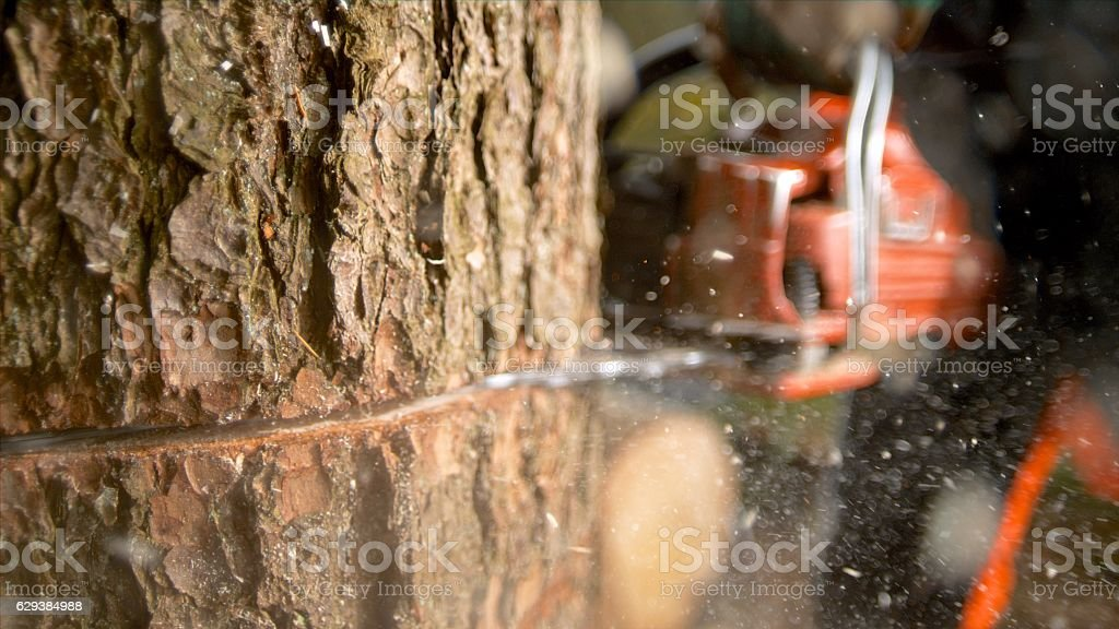 Man sawing tree in forest stock photo