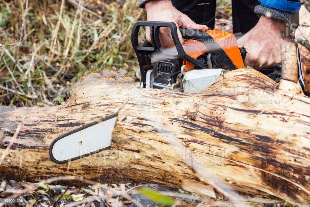 Man Saws petrol saw tree trunk stock photo