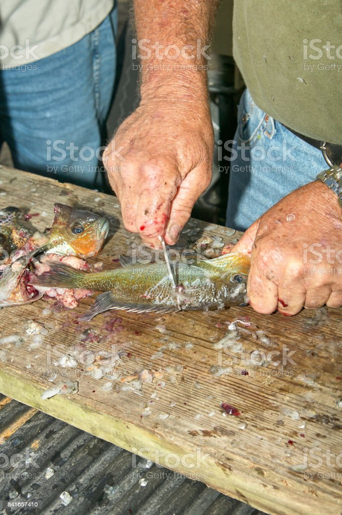 Man scraping fish on wooden board stock photo