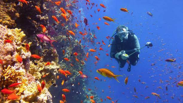 Man scuba diver near beautiful coral wall with tropical fish stock photo