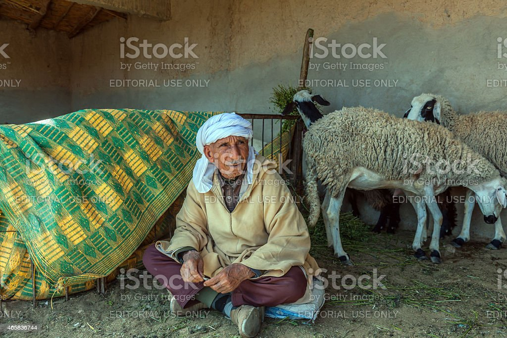 Man sells sheep on animal market Erfoud, Morocco, North Africa Erfoud, Morocco - April 6, 2014: Man sells sheep on animal market Erfoud Morocco North Africa 2015 Stock Photo