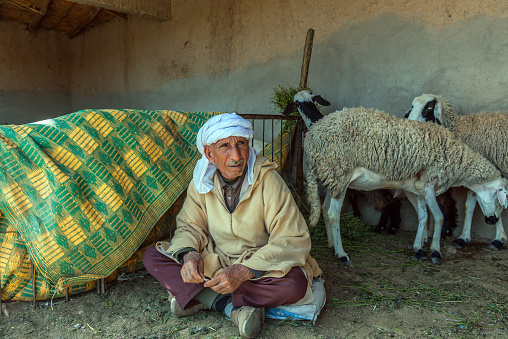 Man Sells Sheep On Animal Market Erfoud Morocco North Africa Stock Photo - Download Image Now