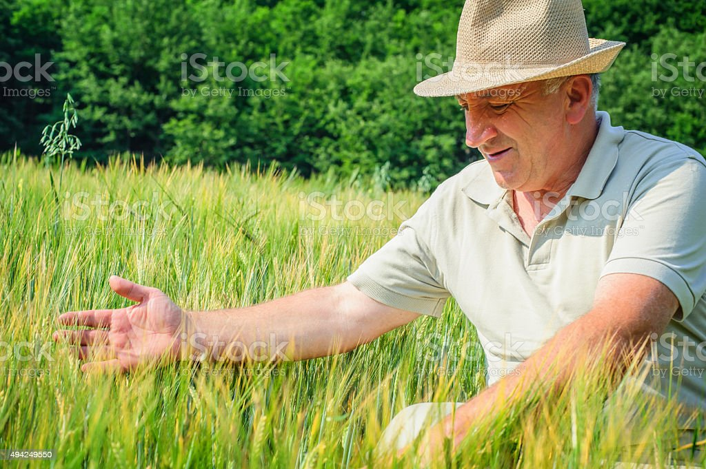 Man sitting in wheat field with arms outstretched stock photo
