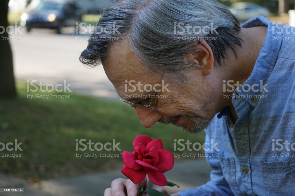 Man smelling red rose stock photo