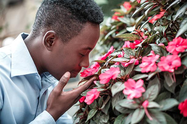 Man sniffing the flowers picture id613525778?b=1&k=6&m=613525778&s=612x612&w=0&h=haa57kt utf39jwto8omvgx1bt1kadybqsscpp q ja=
