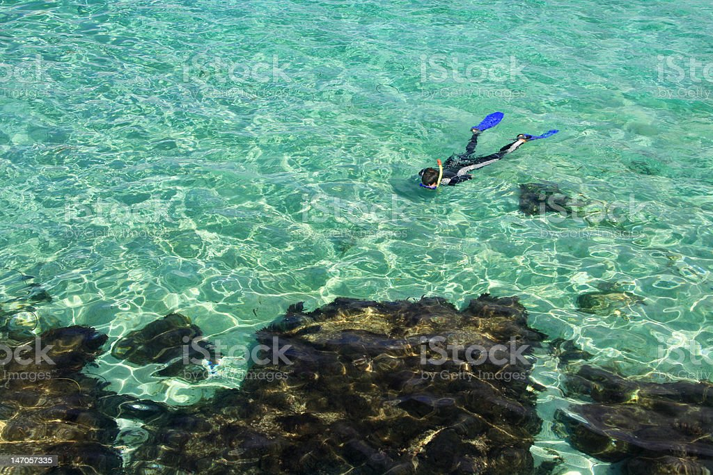 Man snorkeling stock photo