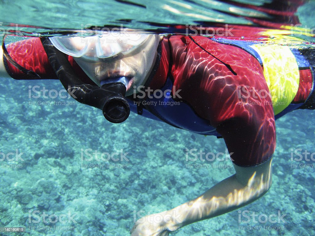 Man snorkeling with wetsuit underwater in Maui, Hawaii royalty-free stock photo